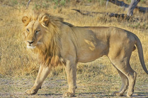 South Africa Tours - Lion Park
