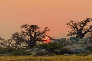South Africa Tours - Botswana