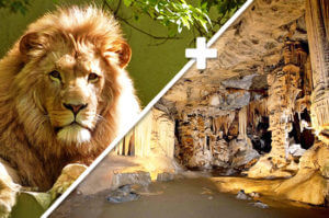 South Africa Tours - Sterkfontein Caves + Lion Park