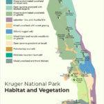 Kruger National Park Habitat and Vegetation